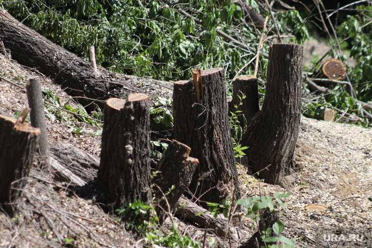 деревья мешают школе Кургана