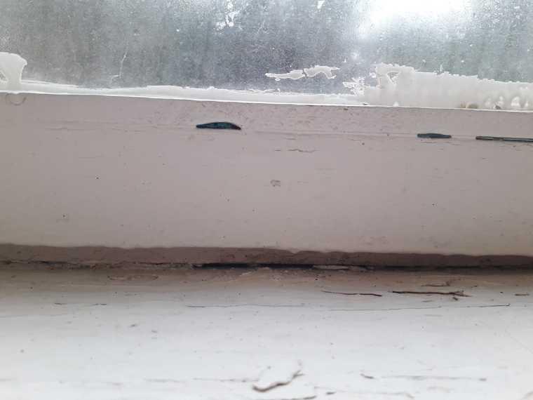 Пермских школьников вместо «Артека» закрыли на карантин. «Кровати с жуками». Фото