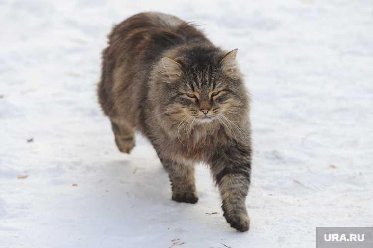 Челябинск зоозащитник кот