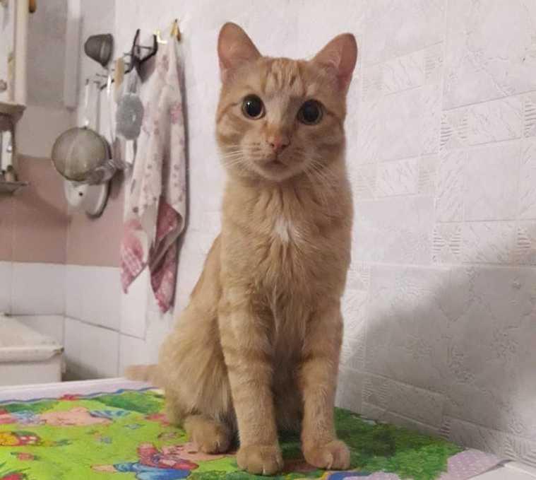 В Челябинске отдают котов бабушки, умершей в ковидном госпитале