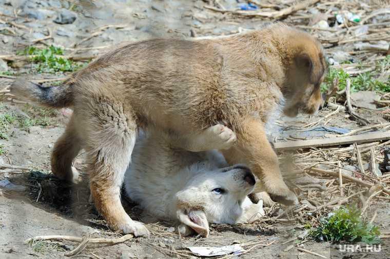 Тюменец убил щенка