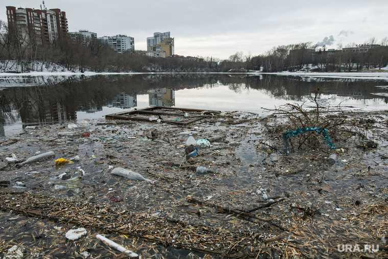мусор в городском пруду Екатеринбурга фото