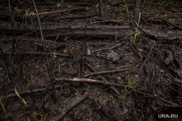 минприроды РФ Звездный загрязнение мазут