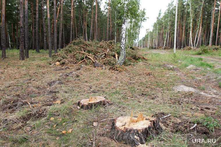 рубка деревьев