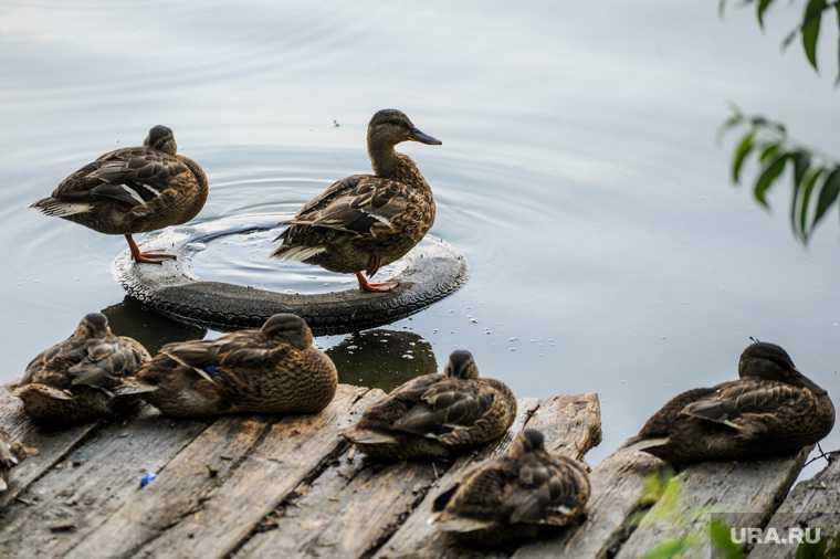 Челябинская область озера экология обмеление