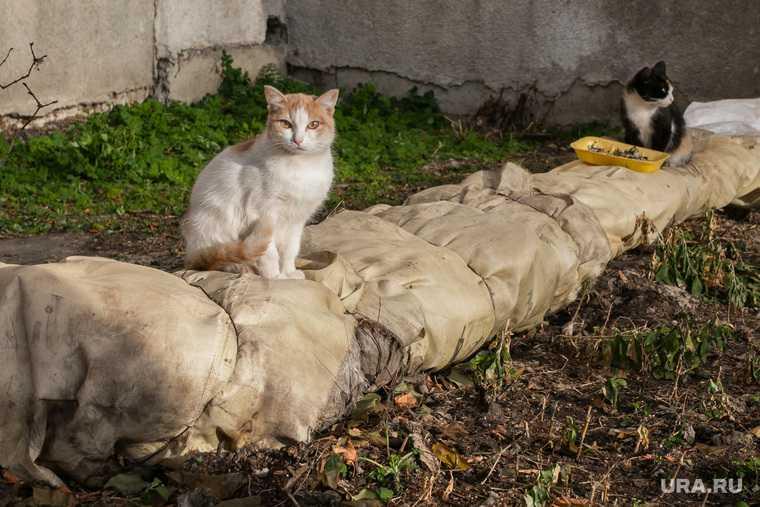 Россия кошки собаки учет регистрация