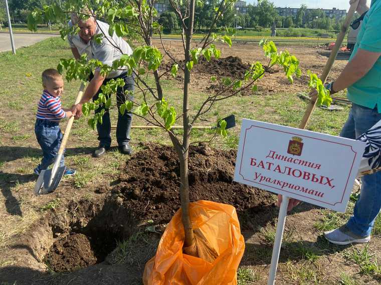 Мэр Нижнего Тагила посадил династическое дерево. Фото