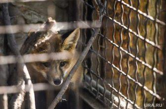 живодеры цирк запретить животные лисы