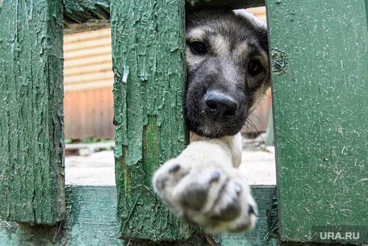 гибель собак в приюте